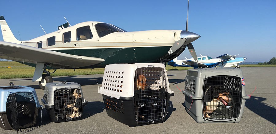 PHOTOS COURTESY OF PITTSBURGH AVIATION ANIMAL RESCUE TEAM
