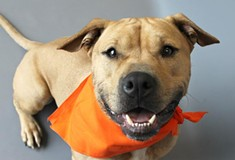Pet Adoption Resources