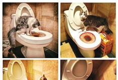 From swimming to potty-training, Lars the cat is one-of-a-kind