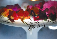 Locally based, internationally known artist Ali Momeni wants to change our relationship with insects