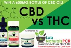 CBD vs. THC: Are you an expert?