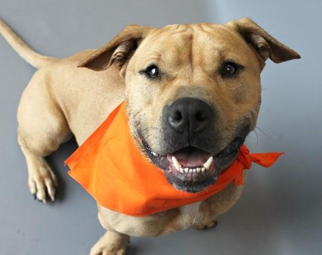 Best Dog Adoption Pittsburgh