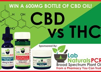 CBD vs. THC: Are you an expert?