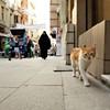 <i>Kedi: The Cats of Istanbul</i>