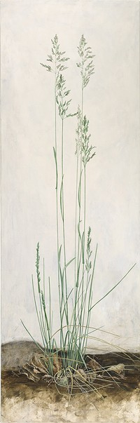 Wiesen-Rispengras, Bluegrass, Poa pratensis [Poa pratensis Linnaeus, Poaceae alt. Gramineae], acrylic on wood panel by Sylvia Peter (1970–), 2016, 90 x 30 cm, HI Art accession no. 8307, reproduced by permission of the artist. - Uploaded by Hunt Institute