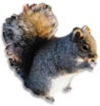 fc4a1c22_squirrel.jpg