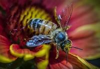 7a898c9f_the_pollinator.jpg