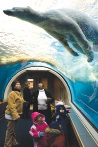 Under-bear: The kids from Dottie's Daycare check out the zoo's three-year-old polar bear. - PHOTO BY BRIAN KALDORF