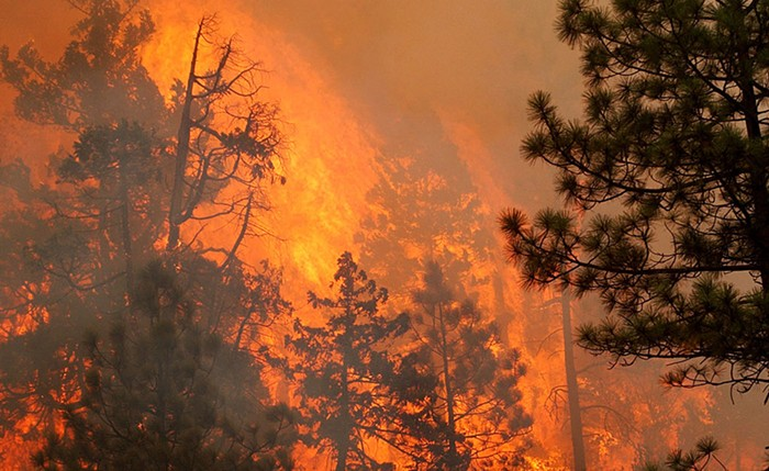 The tops of trees engulfed in flames