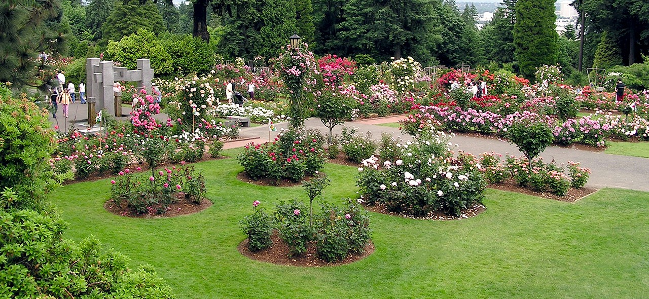 100 years of roses at international rose test garden in portland or on sat aug 26 11 a m for Portland international rose test garden
