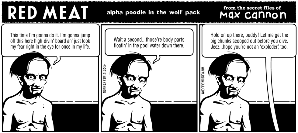 alpha poodle in the wolf pack