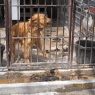 Missouri Is Nation's No. 1 Offender in Puppy Mills — Again