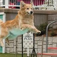 Jump More, Bark Less