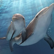 No Fluke: <i>Dolphin Tale 2</i> is a warm, wise animal tale