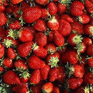 St. Jacob Strawberry Festival and Berry Bicycle Ride This Saturday