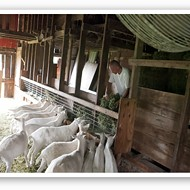 Baetje Farms Cheese -- and the Folks (and Goats) Who Make It [PHOTOS]