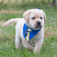 The St. Louis Blues Adopted a Service Dog and the Pupper Needs a Name