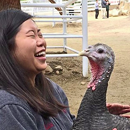 Cuddle a Turkey This Thanksgiving Instead of Eating One, the Gentle Barn Says