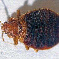 St. Louis Has a Big Old Bedbug Problem