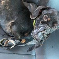 Dog Found Bound With Duct Tape, Jefferson County Sheriff Investigating