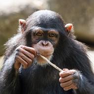Missouri Primate Foundation Sues PETA, Seeking to Block Future Lawsuit