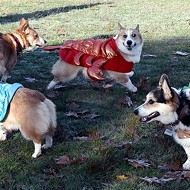 Small Change to Host Cutest Party in STL, Corgi Howl-O-Ween, Tomorrow