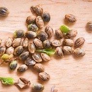 The Best Seed Banks (Online) that Ships to USA - Top 10 Products 2021