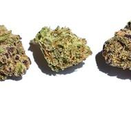 Chimchards' Choice: Top Five Marijuana Strains in St. Louis