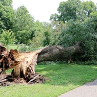 Tower Grove Park Launches Fundraiser After Losing 40 Trees