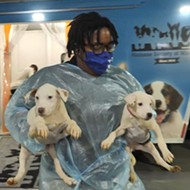 37 Storm-Tossed Dogs Arrive in Missouri After Rescue in Louisiana