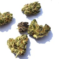 """Review: Tommy Chims Smokes Illicit Gardens' """"Purple Chem"""" Strain"""