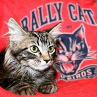 Rally Cat's Lawyer Blasts Contact with Cardinals as 'Troubling'
