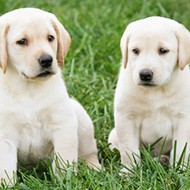 Petland Puppies Have Infected 39 People, CDC Says — Including One in Missouri