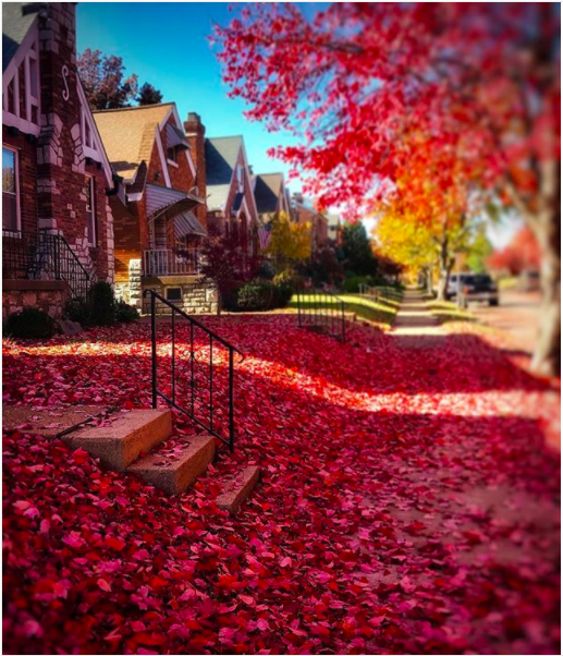 Lindenwood Park showing off vibrant colors of fall. - PHOTO COURTESY OF INSTAGRAM | INSTAE_GRAM