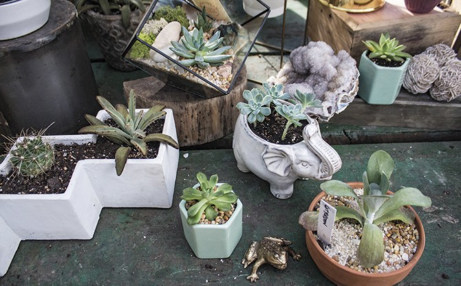 Flowers & Weeds: a garden store that keeps Cherokee Street blooming. - SARA BANNOURA