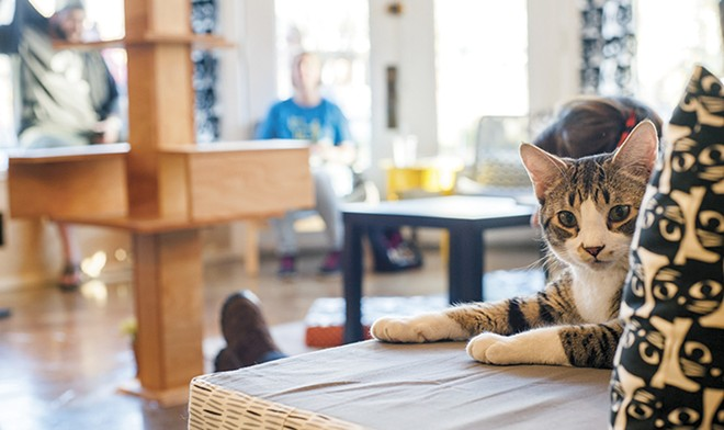 Make new friends of the feline variety at Mauhaus. - KELLY GLUECK