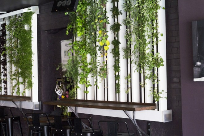 Live greens of the wall of the restaurant - HAYLEY ABSHEAR