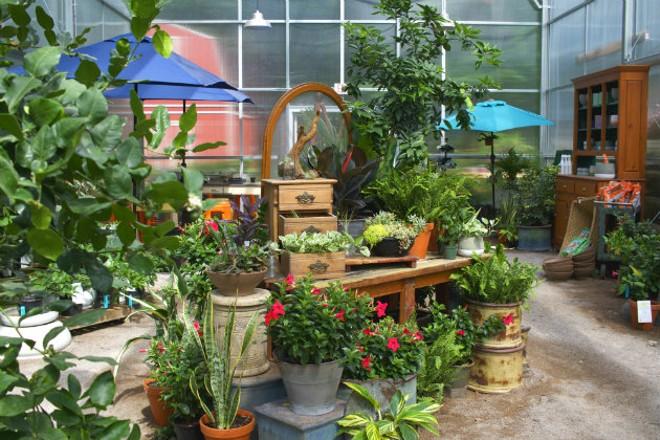 Inside Maypop's greenhouse. - CHERYL BAEHR