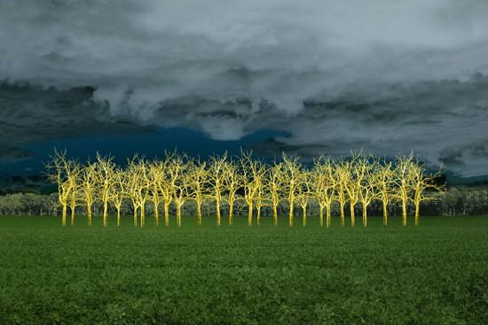 In the Field of Gold -- Soybean field in rural Southern Illinois - ELLEN JANTZEN
