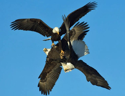 Eagles don't fly, they tri-force. See eagles, hopefully doing something as awesome as this, on Sunday in Alton. For free!