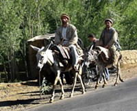 Donkeys_in_Afghanistan.jpg