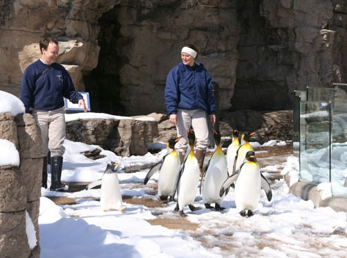 This was actually taken during the big snow in March 2008. Still, the penguins have to be pumped again this year. - IMAGE VIA