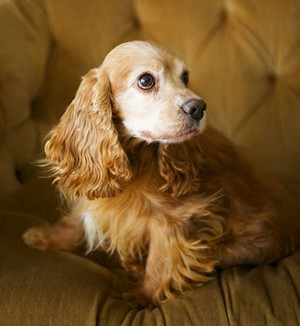 This dog used to belong to the Schindlers. Was he abused? - JENNIFER SILVERBERG