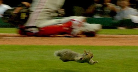 Was Rally Squirrel just fleeing a toxic cloud of White Castle-induced methane? - VIA