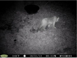 This cat was photographed on Halloween night near Branson. Rowrrrr. - IMAGE VIA