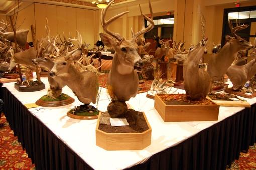 Dozens o' deer heads. View more photos here.
