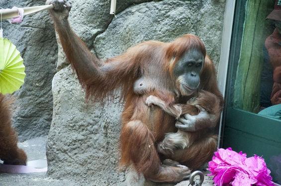 orangutanbabyshower_michausher.jpg