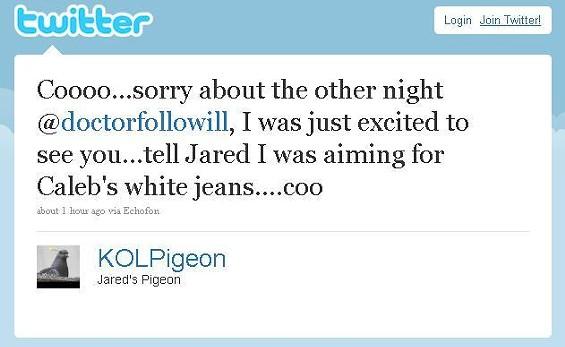 pigeontweet2.JPG