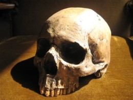 A human skull like this was found in Sauget - IMAGE VIA