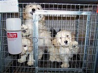 Out of town money is pouring in to fight puppy mills.